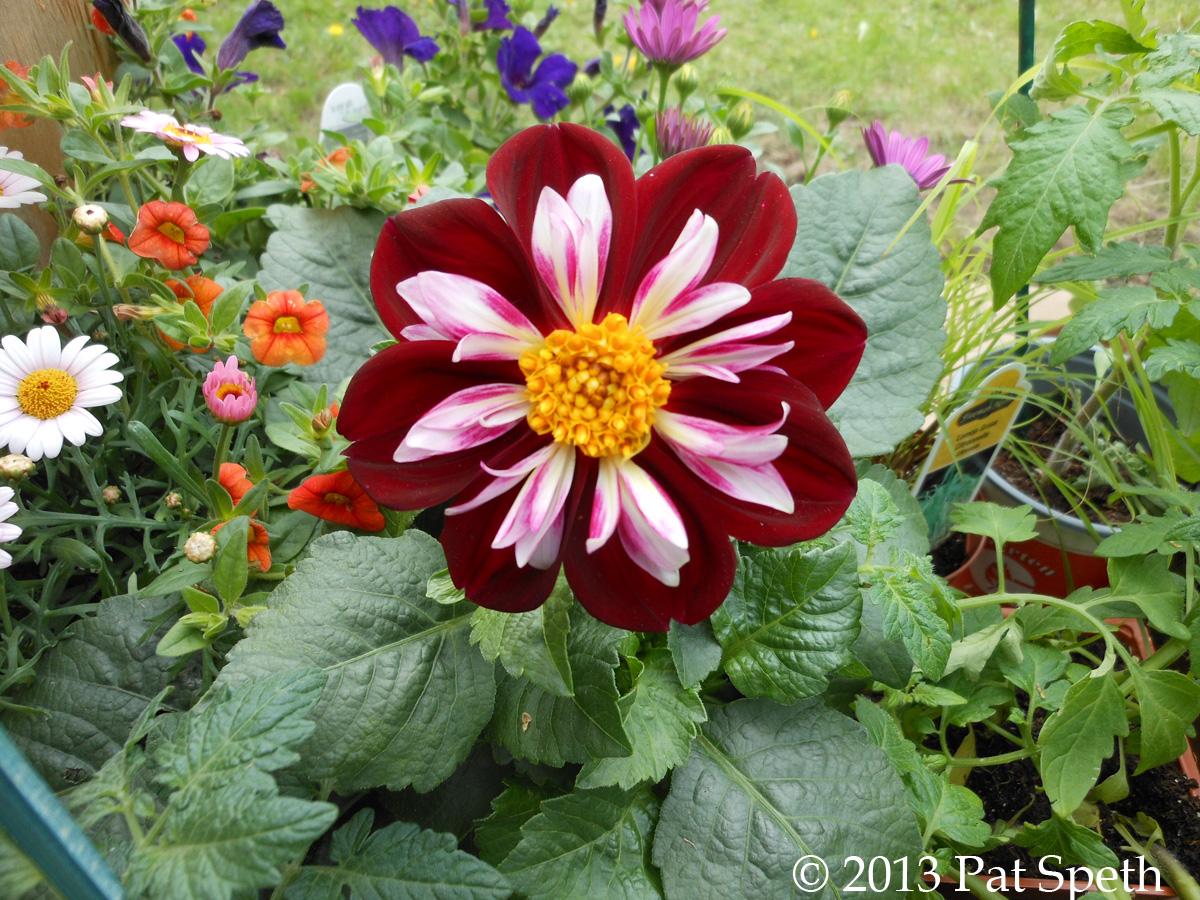 flower garden  nickelquilts, Natural flower
